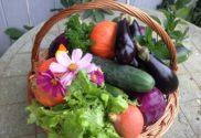 harvest-1225593_1280