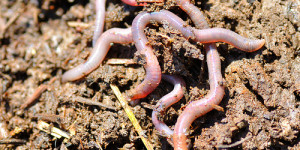 Bug Census: How You Could Spend 31,000 Years in a Bucket of Soil