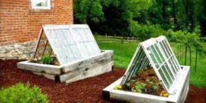 Winter Garden Innovation: Using Old Windows to Extend Your Season
