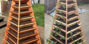 Growing Indoors? Save Space and Make Your Own Vertical Garden Pyramid