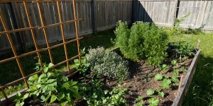 Vegetable Gardening in a Squeezed Space