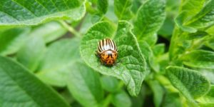 Pest Control and How to Make Your Own Natural Insect Spray